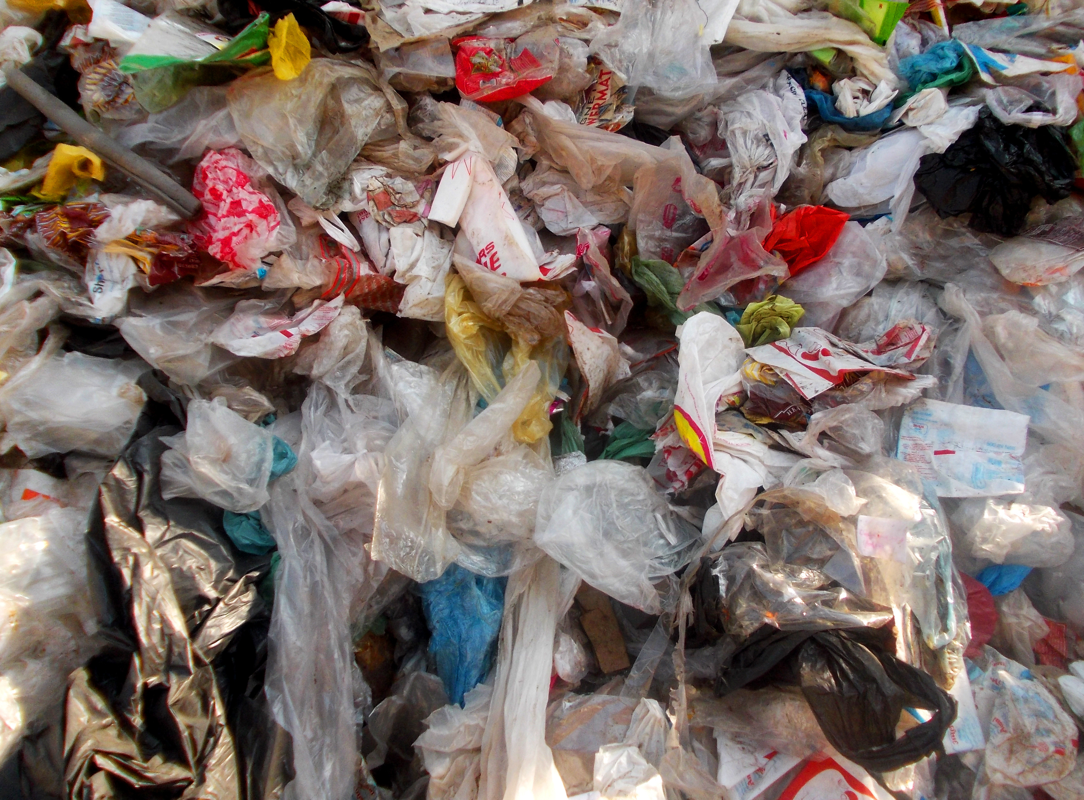 Plastic Bags in the Great Pacific Garbage Patch | EarthCapades